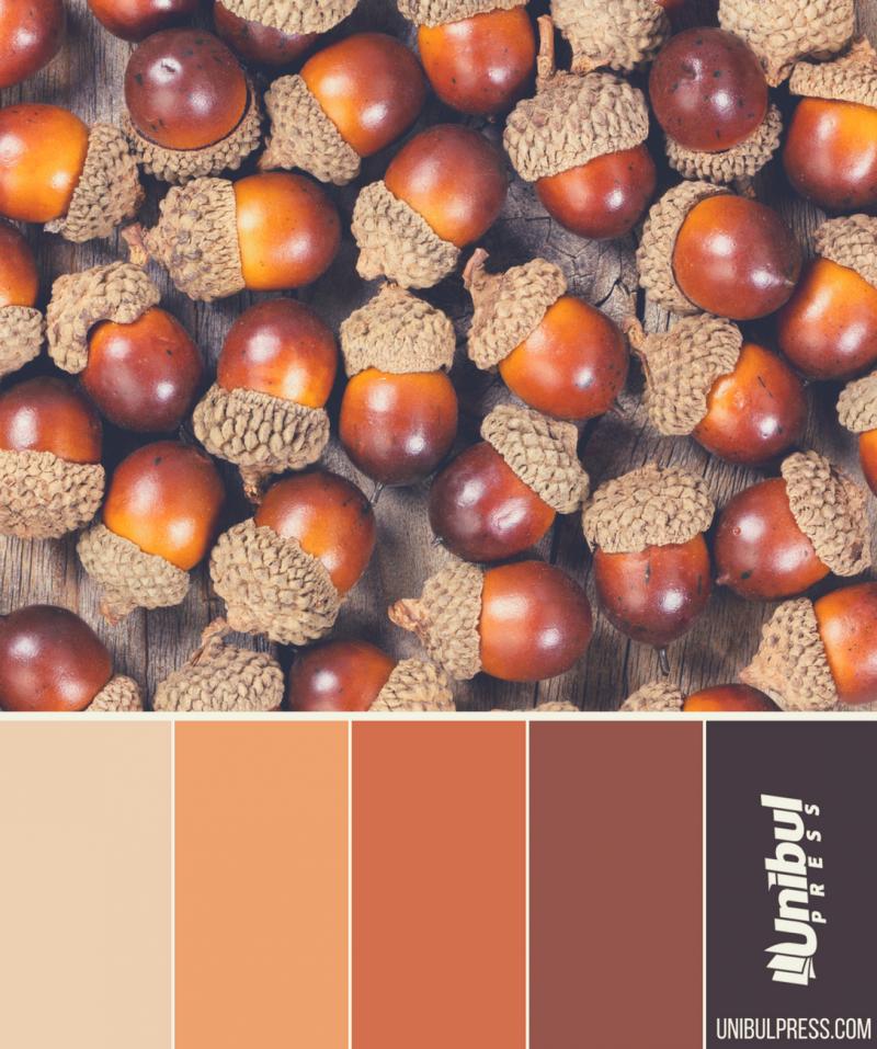 autumn coloring palettes - acorn nuts