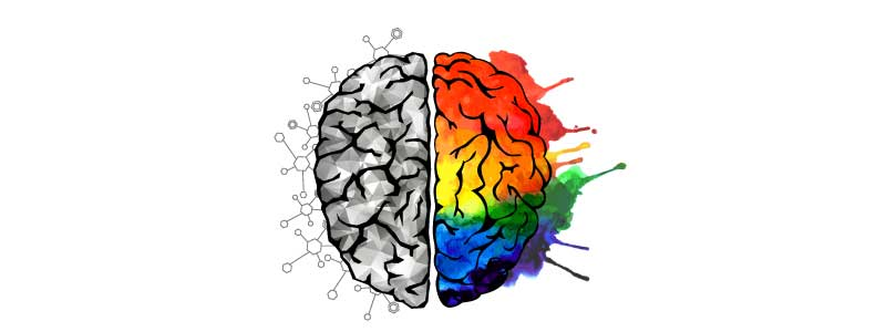 brain-halves