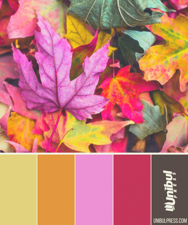 autumn coloring palettes - different colors of autumn leaves